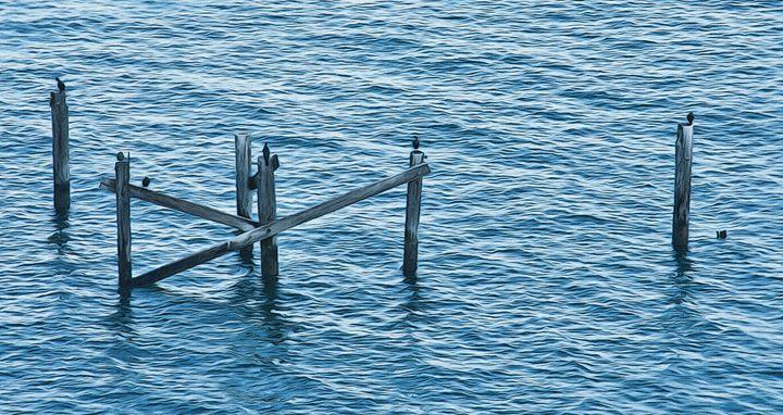 Still in water - Capturing Life