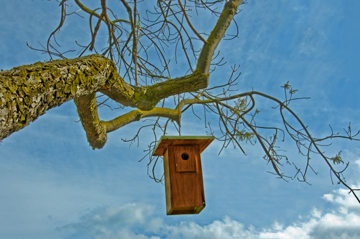 Bird house in a tree - Capturing Life