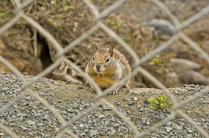 Squirrel behind wire fence - Capturing Life