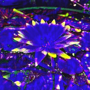 Flower zone