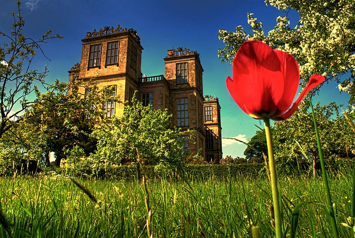 Hardwick Hall and Tulip    - Andy Milner Photography - Photography