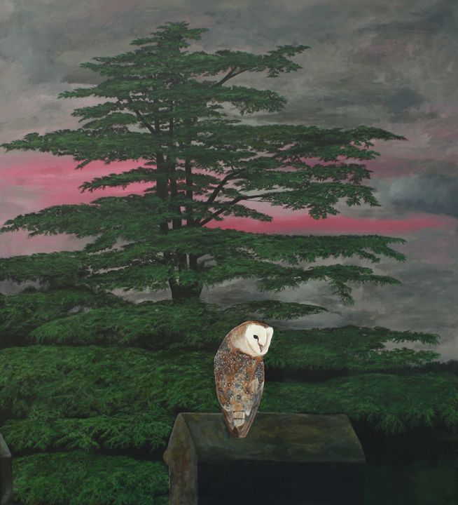 A Barn Owl on Lockinge Church Tower - Robert Harris