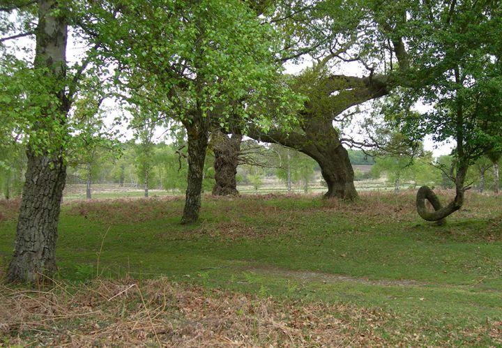 Tree Shapes - Robert Harris