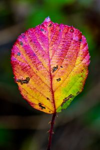 Details of a old colorful leaf