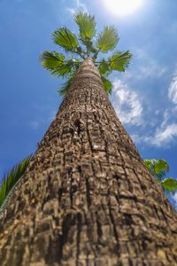 Big palm tree
