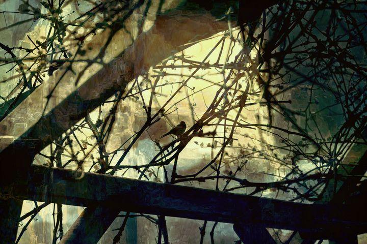 A Bird's Eye view - SnapsDrops