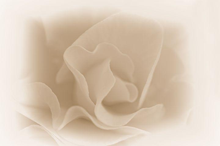 Rose Whisper - ConniePublicover