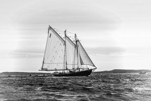Black & White Bluenose 2
