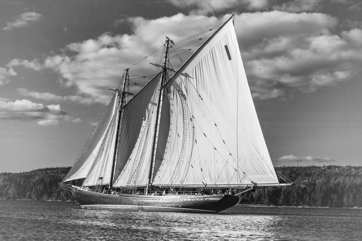 The Bluenose - ConniePublicover