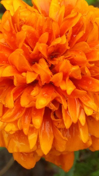 Orange Joy - Dara Vucetic