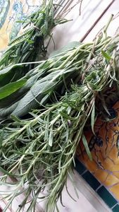 Fresh Herbs - Dara Vucetic