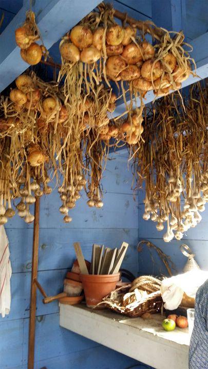 Onions And Garlic - Dara Vucetic