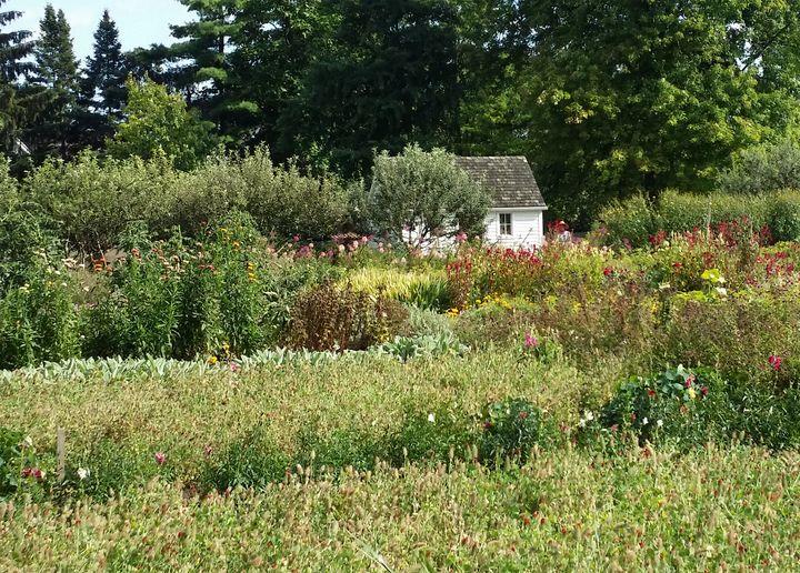 The Garden House - Dara Vucetic