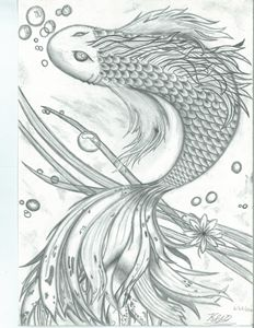 Black and White Koi