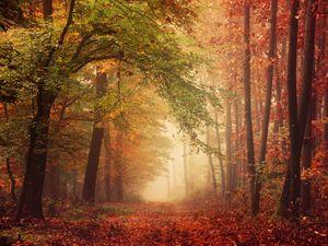 Foggy autumn forest pathway