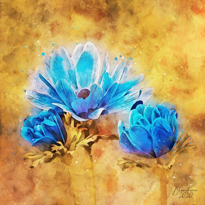Blue Anemone - Dreamframer Gallery