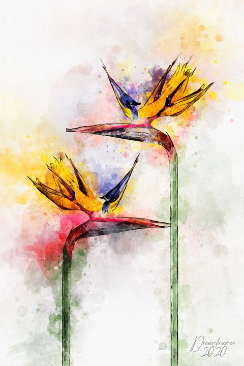 Bird of Paradise Flower - Dreamframer Gallery