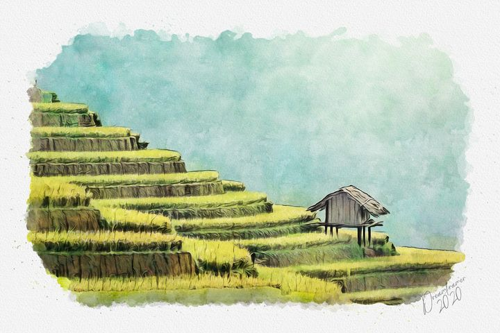 Rice Terraces in Thailand - Dreamframer Gallery