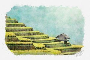 Rice Terraces in Thailand