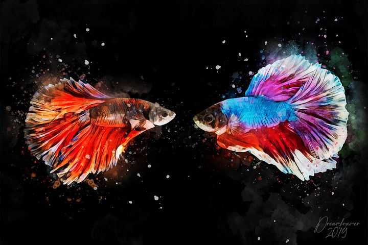 Siamese Fighting Fish - Dreamframer Gallery