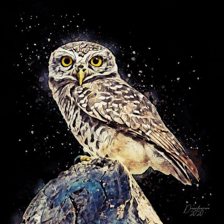 Little Owl - Dreamframer Gallery