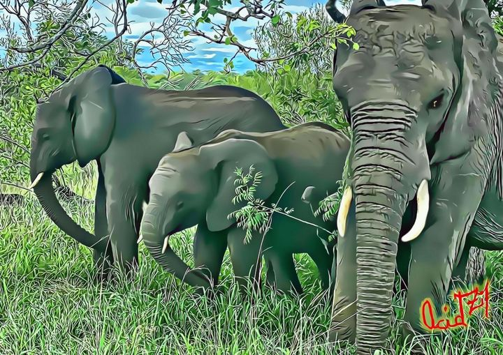 African Elephants - AcidZil