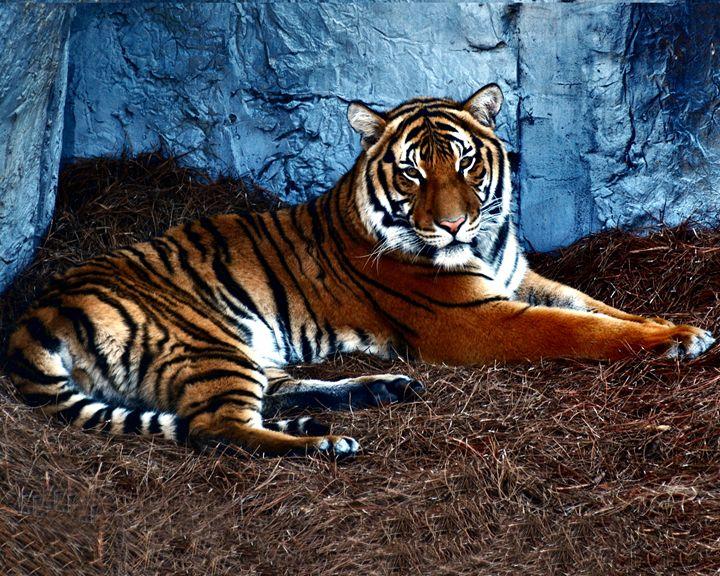 Tiger - Corinne's Prints n things