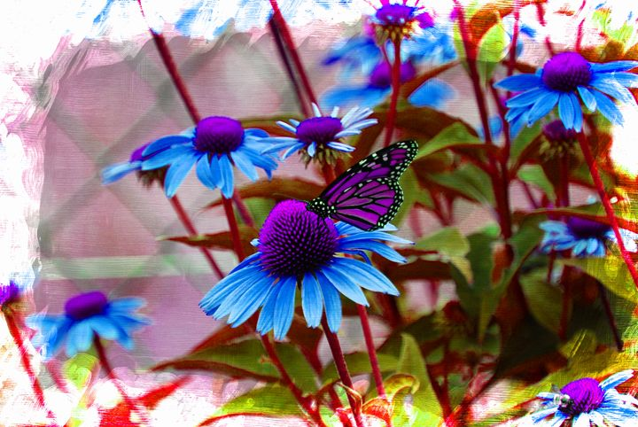 Purple Butterfly - Corinne's Prints n things