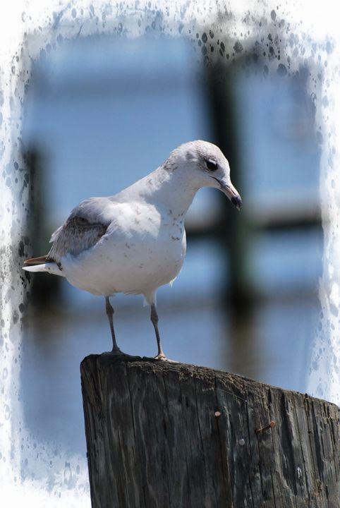 Seagull - Corinne's Prints n things