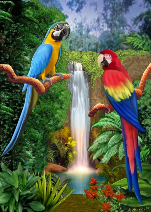 MACAW TROPICAL PARROTS - HOLBROOK ART PRODUCTIONS
