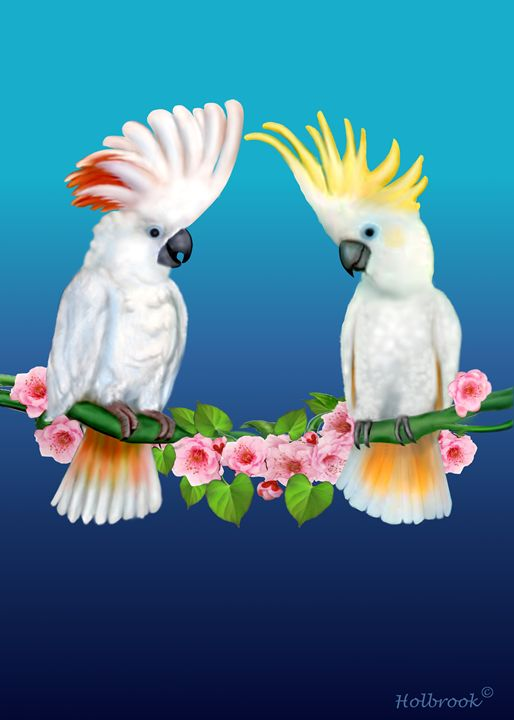 COCKATOO COURTSHIP - HOLBROOK ART PRODUCTIONS