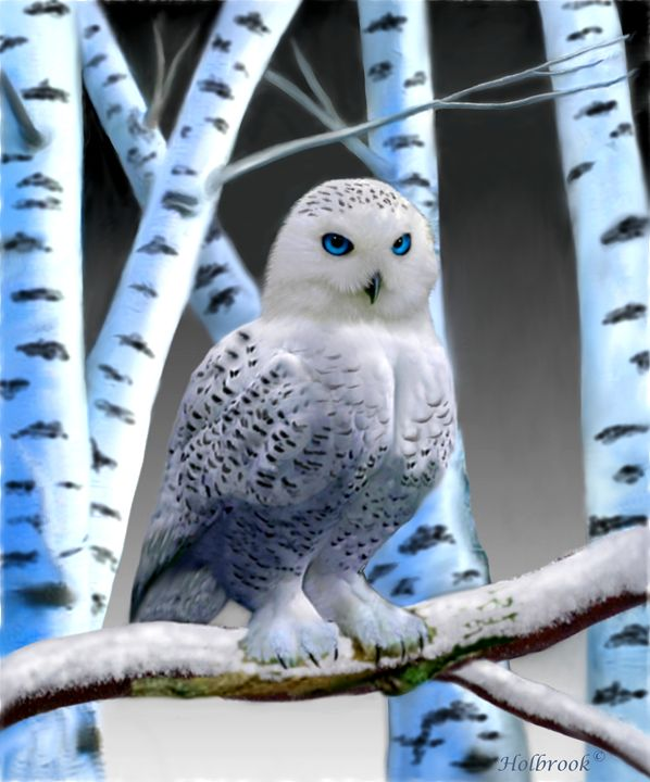 BLUE-EYED SNOW OWL - HOLBROOK ART PRODUCTIONS