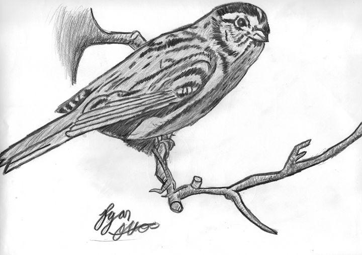 Bird on a Branch - Ryan Otto Art