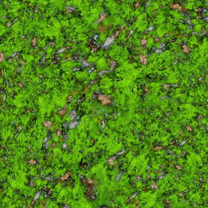 Big mossy wall