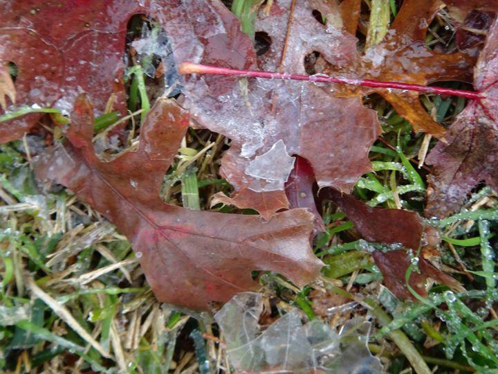 Maple leaves - Sreelatha Nandigiri
