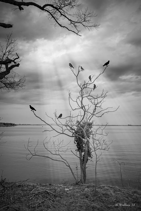 Tree Of Light - Brian Wallace