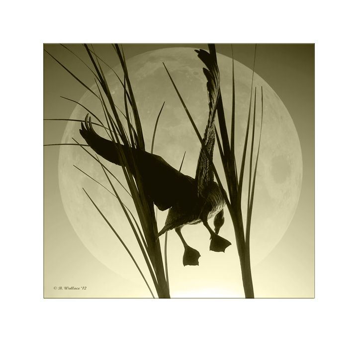 Goose In The Moon - Sepia - Brian Wallace