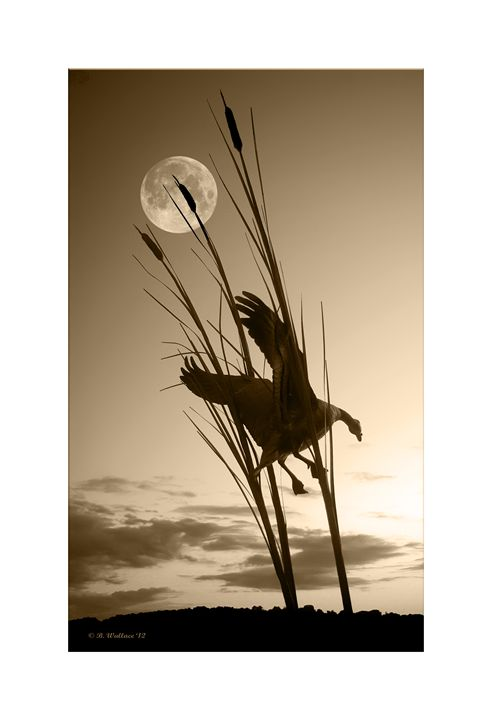 Goose At Dusk - Sepia - Brian Wallace