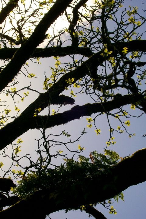 Fern Tree - Mercurial Day