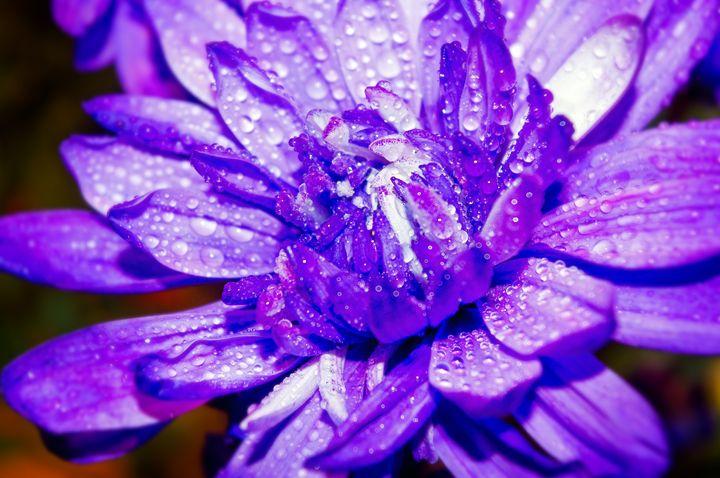 Purple one #2 - Arnaud Photography