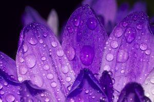 Purple one #5