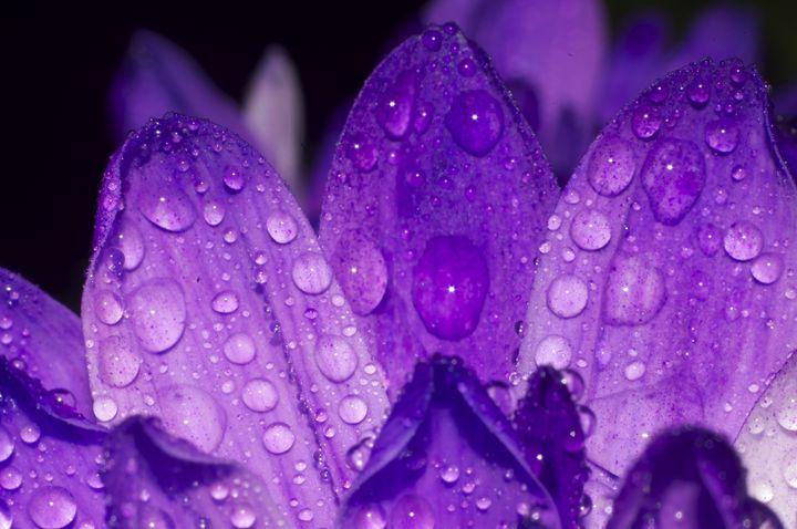 Purple one #5 - Arnaud Photography