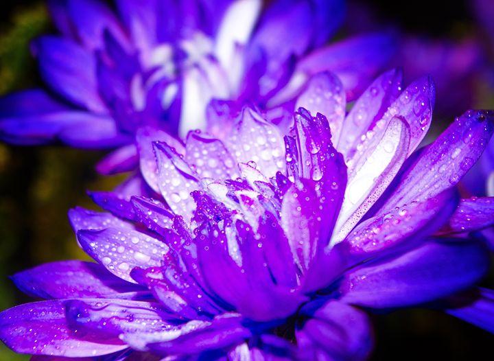 Purple one #3 - Arnaud Photography