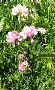 Flowers - Hallie's art