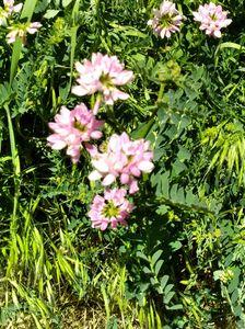 pink flowers - Hallie's art