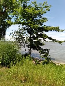 south twin lakes, Iowa - Hallie's art