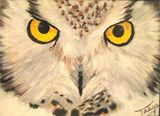 Owl Stare, 10.5 by 7.5