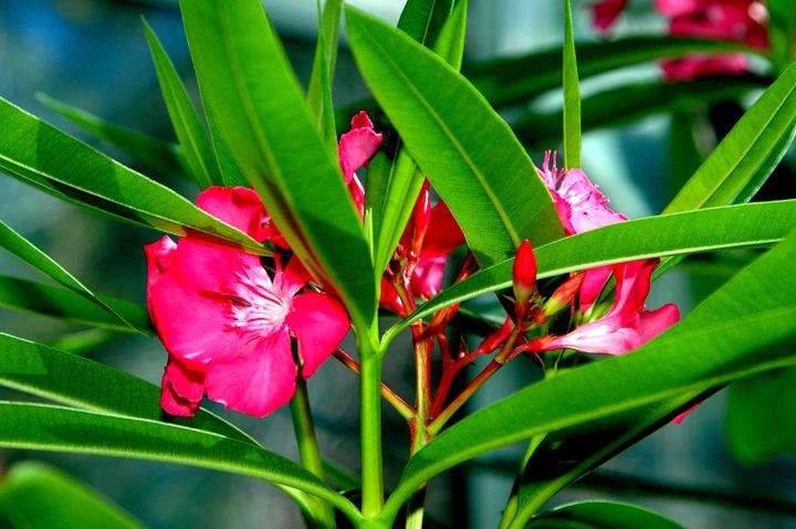 Vibrant Beauty - LiviaDesigns