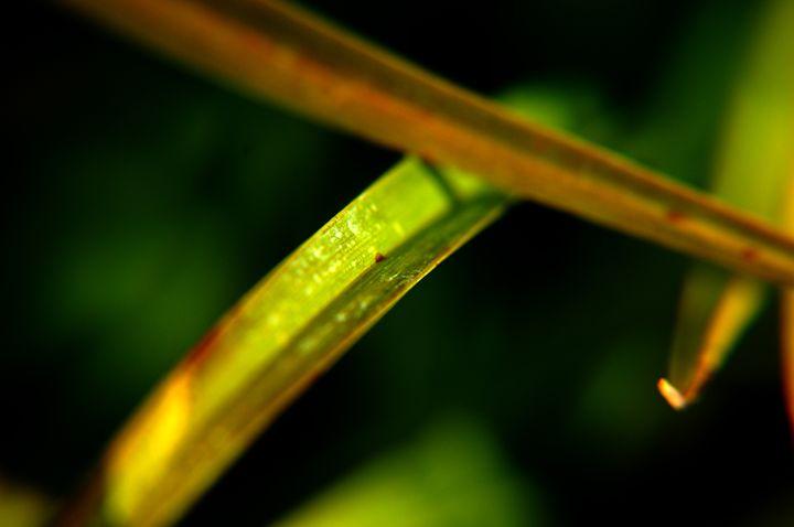 Blades of Beauty - LiviaDesigns