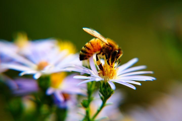 Busy Bee - LiviaDesigns